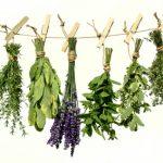 طب سنتی و گیاهان دارویی (بخش پایانی)