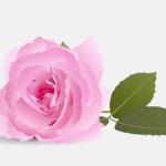 خواص گلاب برای درخشندگی ، لطافت پوست و مو